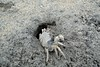 Holes in the sand (wfung99_2000) Tags: alleppey beach kerala crab sand ghost