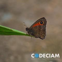 16 Mariposa - Proyecto Santuario de la Naturaleza Quebrada de Córdova, Región de Valparaíso, Chile