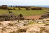 Dartmoor landscape contrasts (Keith in Exeter) Tags: dartmoor landscape contrast nationalpark moorland farming grass field tree stonecircle kistvaen standingstone rock granite devon