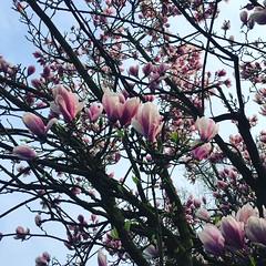 (seustace2003) Tags: весна lente spring tearrach primavera printemps frühling delft tu nederland holland pays bas paesi bassi an ísitír