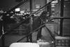 (ニノ Nino) Tags: ilford delta 400 dog doggy doggo black white olympus mju ii 35mm 35 mm film analog analogue