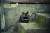 (ニノ Nino) Tags: kodak portra 400 cat cats kitty kittens gato nikon f501 n2020 35mm film 35 mm analog analogue urban street streets