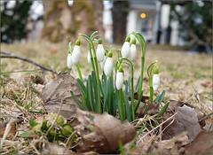 Winter's pulling back (Felip1) Tags: 1848671a