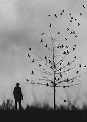 never give up (L. Paul) Tags: fujifilm fujifilmxe3 xe3 fujixe3 fuji 1855 fuji1855 birds black white blackandwhite