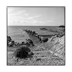 dino • pittenweem, scotland • 2017 (lem's) Tags: dino dinosaurus dinosaure pittenweem alba scotland ecosse coast cote mer sea zenza bronica