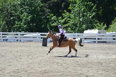 DSC_4105 (Primespot Photography) Tags: show horse horseshow game games horsegames barrels barrells barrals barralls pony