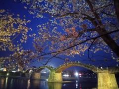 Iwakuni - Moment of Bridge (tcchang0825) Tags: japan iwakuni sakura cherryblossom nightview bridge