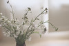 Wild at home (Aby Images) Tags: canon eos 100d 50mm home wild flowers bretagne finistère vase britanny soft