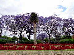 Jardines Murillo (Song Catcher) Tags: garden city seville spain 2018 trees flowers outdoor