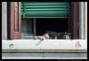 Giudecchino (Teone!) Tags: venezia gatto cat window finestra riposo rest pennichella venice italy italia veneto