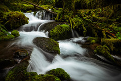 IMG_0772.jpg (Eric DeBord) Tags: 6d creek oregon nw forest water nature northwest canontse24mmf35lii cascademountains willamettenationalforest wilderness canon