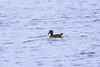 october 2017 lake katherine (timp37) Tags: lake katherine palos illinois fall october 2017 bird duck