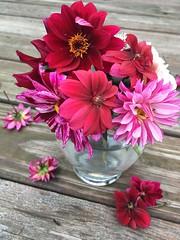 Dahlias 💕 (dov_ereinford) Tags: dahlia bouquet glass vase wood pink