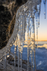 Icicles hang from rocks beside winter Ontario lake (blurMEDIA Stock) Tags: canada canadianshield earth georgianbay ontario ancient blue chemistry clean climate climatechange cold colortemperature cool crystal environment environmental fragile fragility freezing frigid frozen globalwarming goldenhour ice icecube icicle icy kelvin lake lakeice landscape light melt mood nature north northern outdoor phasechange planet pure purity refreshing shoreline solitude stewardship sunset thaw warm warming water whitebalance wilderness winter