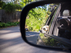 Beagle in mirror is closer than she appears. (Thomas Cizauskas) Tags: atlanta georgia beagle dog car humor ethel goggles doggles