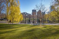 B1005301 (sswee38823) Tags: summaron summaronm15628 28mm summaron28 leicasummaronm15628 leica leicam leicacamera m10 leicam10 leicacameraagleicam10 boston bostonma bostonpublicgardens bostonpublicgarden landscape cityscape park lagoon water pond bridge lagoonbridge photography photograph photo seansweeney seansweeneyphotographer