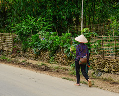 A woman walking on rural road (phuong.sg@gmail.com) Tags: agriculture asia asian cambodia curve ethnic ethnicity face farm farmer female field harvest harvesting highland hmong indigenous laos laugh life minority mong mountain nature people person plant portrait poverty region rice rural sapa scene smile terraced thai travel valley vietnam vietnamese villager woman work yellow