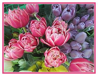 Gorgeous Tulip Mix