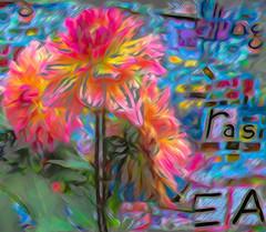 Dahlia Blaze (virtually_supine) Tags: kreativepeopletreatthis197challenge awardtreechallenge170bloomingblossoms mosaic dahlias flowers blooms vivid colour inthestyleofvangogh painterly photomanipulation digitalartwork brillianthues layers photoshopelements13mac crayoneffectpse13mac topaz topazvgiioilcorrection impressionist text