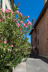 Flowers at an Alley (Bephep2010) Tags: 2016 77 alpha blume gasse nyon sal1650f28 slta77v schweiz sommer sony switzerland vaud waadt alley flower pink rosa summer ch