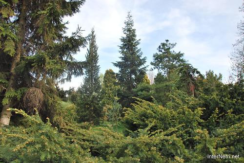 Ботанічний сад імені Гришка Цвітуть магнолії InterNetri  Ukraine 179