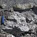 Sandstone (Middle Pennsylvanian; Frazeysburg Pit, Muskingum County, Ohio, USA) 11