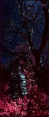 You Are Here (Blurmageddon) Tags: 35mm filmphotography kmzhorizont panoramic panorama colorinfrared kodak fpp infrared infrachrome e6 pakonf135 nexlab oregon eir surreal yellowfilter
