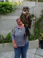 DSC07686 (guyfogwill) Tags: 2018 birds brandonsbirthday devon eurasianeagleowl gbr guyfogwill lynnfogwill may owls paignton unitedkingdom paigntontorquay