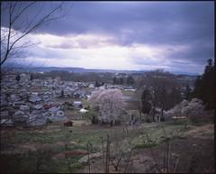 (✞bens▲n) Tags: mamiya 7ii velvia 50 80mm f4 film analogue landscape japan sakura cherry blossoms nagano tree