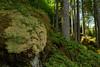 Natural Airbag (Ernst_P.) Tags: aut oetz österreich piburgersee tirol zeiss distagon t 24mm f20 moos wald forest bosque