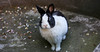3 IMG_9104 b P (Ph Leonardo S.C.) Tags: coniglio bunny