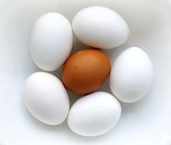 Egg Flower in a White Bowl (Bennilover) Tags: eggs boiled sandwiches colors diversity shells egg bowl eggflower