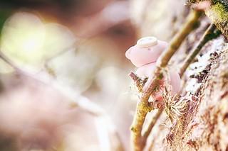 151/365 : Climbing a Tree