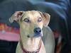 Perro del Tipo Guapo (MaPeV) Tags: ronni piti perro cachorro dog criollo powershot canon g16 trompetilla doggy