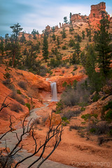 Desert Oasis (Cramer Imaging) Tags: photo photography photograph outdoor outdoors nature natural national nationalpark park utah brycecanyon brycecanyonnationalpark hoodoo hoodoos red water sky desert landscape scenic scenery tree trees plant plants pine pinetree stream green blue morning light morninglight americansouthwest waterfall branch branches