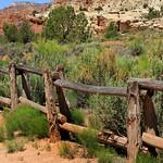 Cedar Fence thumbnail
