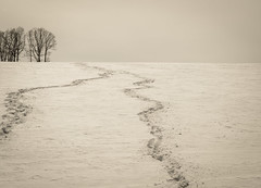 Trails (pasiak75) Tags: 2018 krajobraz landscape outdoor snow winter zima