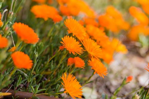 Flowers - IMG_0951
