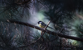 a Tit in the light