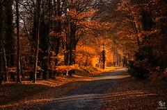 Beautiful Autumn (SeSonnen) Tags: baum herbst laub natur münsterland weg strase tree autumn nature leaves road germany deutschland