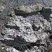 Sandstone (Middle Pennsylvanian; Frazeysburg Pit, Muskingum County, Ohio, USA) 10