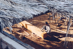 Sur Shipyard (dogslobber) Tags: yellow oman omani middle east arab arabian penninsula sur shipyard ship yard dhou building wood work