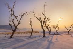 Bahram abad village (Mhmoodi1988) Tags: urmia urmialake urmu sunset sunrise beautiful cloudy nature wonderful tree phtography hosseinmahmoodi photo photography حسینمحمودی tabriz iran nice azerbaijan