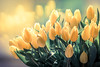 Spring (Rainbow 4A) Tags: spring nikon d810 20005000 mm f56 blooming flower petal floral blossom rose head bouquet calla lily freesia marguerite carnation closeup beauty yellow green color flowers flora bloom beautiful natural plant tulips bokeh