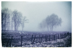 (philippe baumgart) Tags: alsace creepy elsass field fog forest hilsenheim landscape morning paysage ried trees