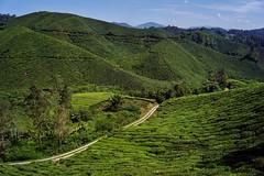 Cameron Highlands - Boh Tea Plantation 2 (luco*) Tags: malaisie malaysia cameron highlands boh tea plantation thé route road chemin