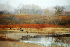 Cranberry Flats Impression (paule48) Tags: canada cranberryflats dreamscape sk sask saskatoon weather breathingspaces color creative fall fineart fog portfolio geese flying canadageese