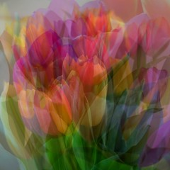 Smile on  Saturday: spring flower 2017/2018 (quietpurplehaze07) Tags: smileonsaturdayspringflower20172018 smileonsaturday springflower tulips rainbow multiexposure bright macro flower
