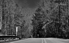 A Scenic Drive (or Walk) Amongst the Trees in the Ozark National Forest (Black & White) (thor_mark ) Tags: ar215 ark215 blackwhite blueskies bostonmountains capturenx2edited centerstripe centerstripes colorefexpro day2 evergreens highway highway215 hillsideoftrees hwy215 landscape lookingnw mountains mountainsindistance mountainsoffindistance nature nikond800e northamericaplains outside ozarkhighlands ozarknationalforest ozarkplateau ozarkstfrancisnationalforests project365 road rollinghillsides standinginmiddleofroad standinginroad sunny trees treesinwinterwithoutleaves triptoozarknationalforestandmountains arkansas unitedstates
