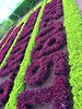 Madeira, Portugal. Madeira Botanical Garden (dimaruss34) Tags: newyork brooklyn dmitriyfomenko image sky clouds sunset portugal madeira madeirabotanicalgarden flowers leaves